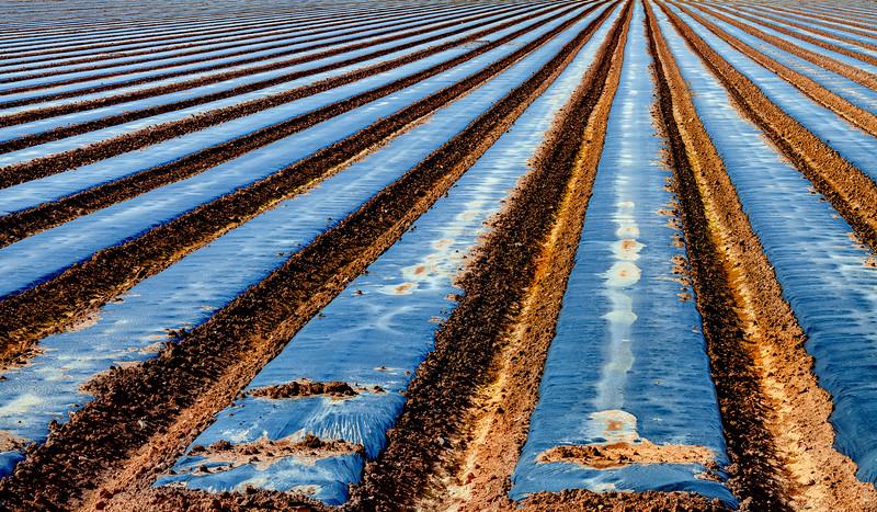 Field 1, Gilroy, California, 2010