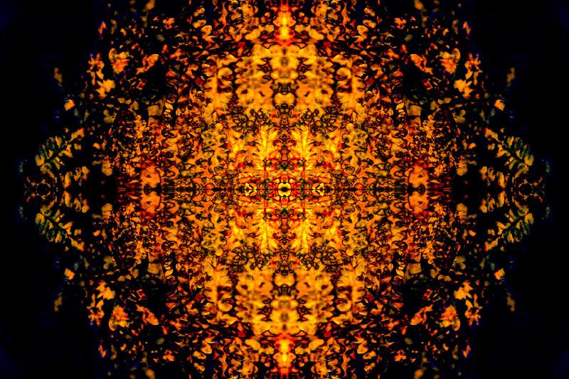 Orange Fern Mandala
