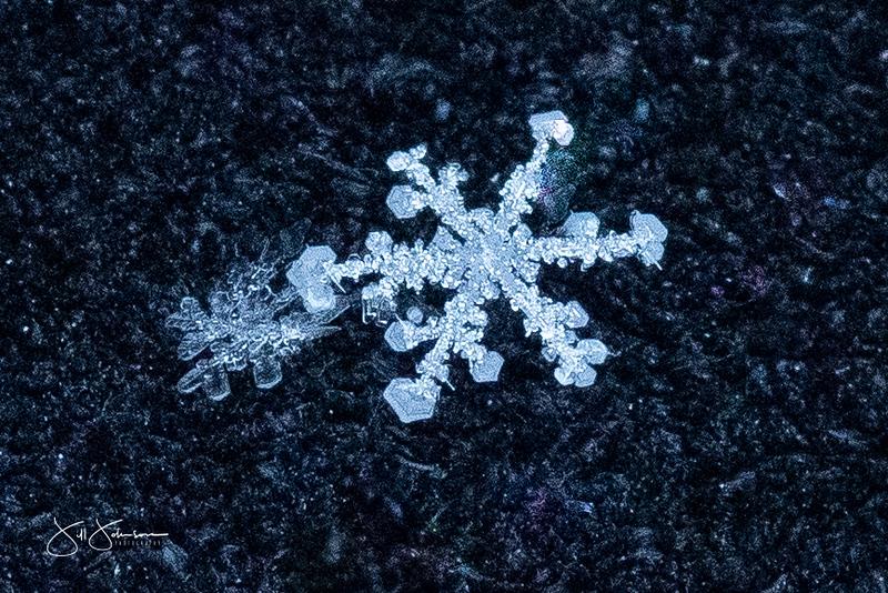snowflakes-1429.jpg