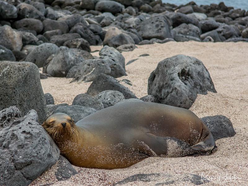 2018 Lobos Island-46.jpg