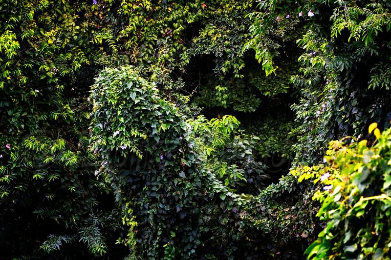 Honduras 0070_.jpg
