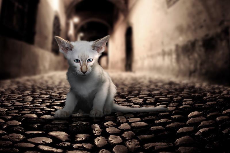 Saule-cat-18.jpg
