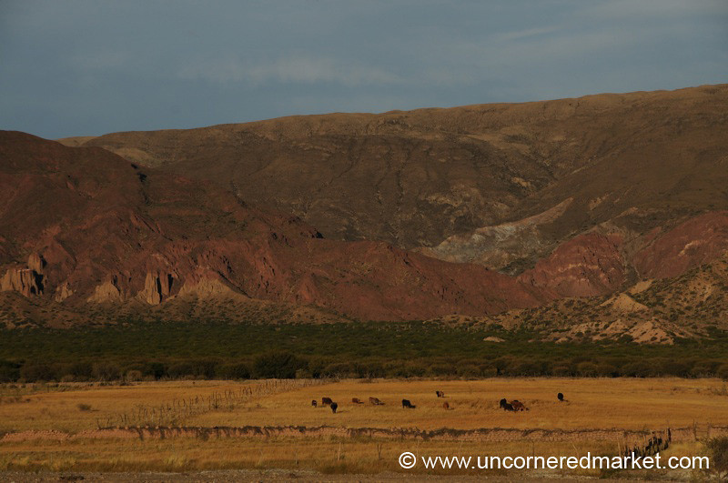 Brush Field - Salar Tour, Bolivia