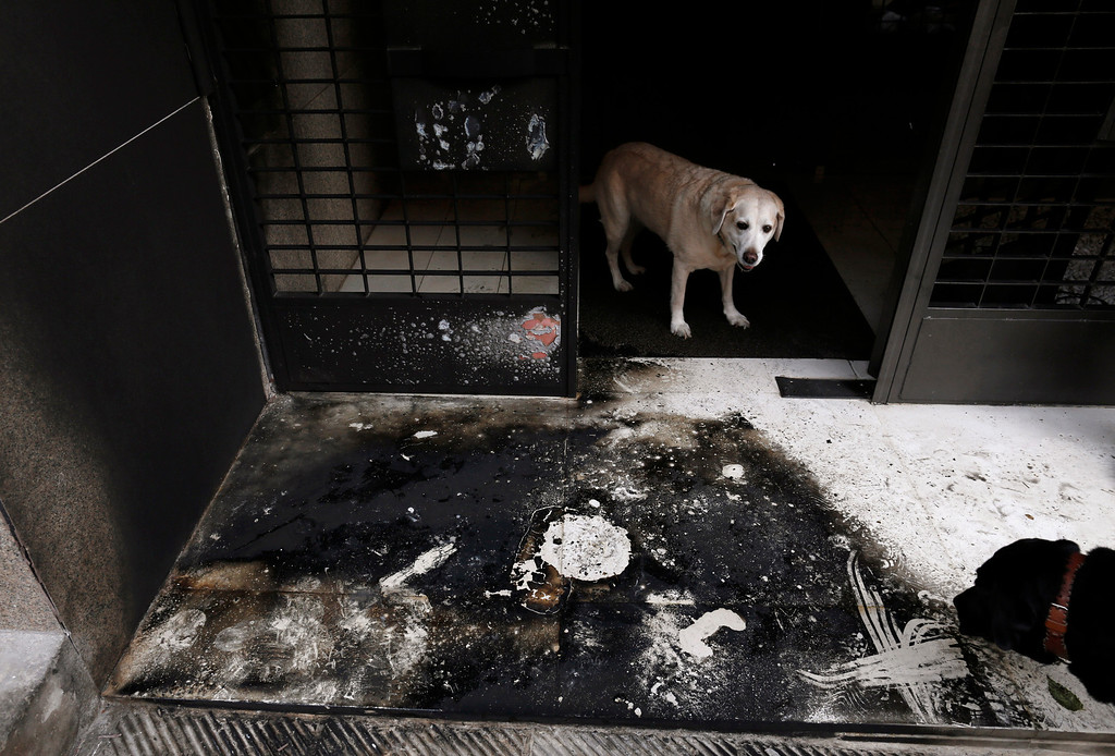. Dogs stand at the burnt entrance of a building following a series of arson attacks against journalists in Athens January 11, 2013.  REUTERS/John Kolesidis