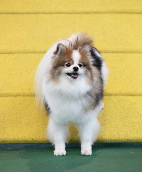 SPCA_Agility-95.jpg