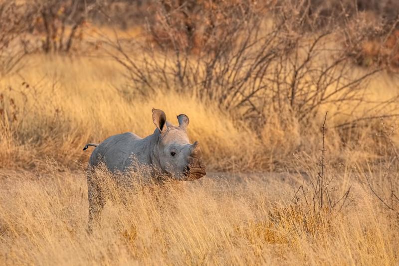Namibia 69A7171.jpg