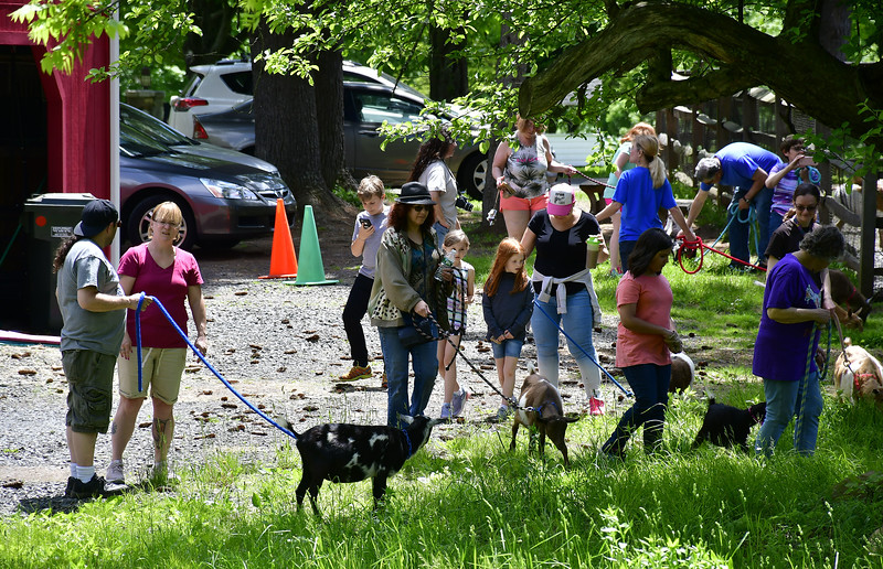 5/25/2019 Mike Orazzi | Staff Participants during the Fairy Goatmother play date held at Bradley Mountain Farm in Southington on Saturday.