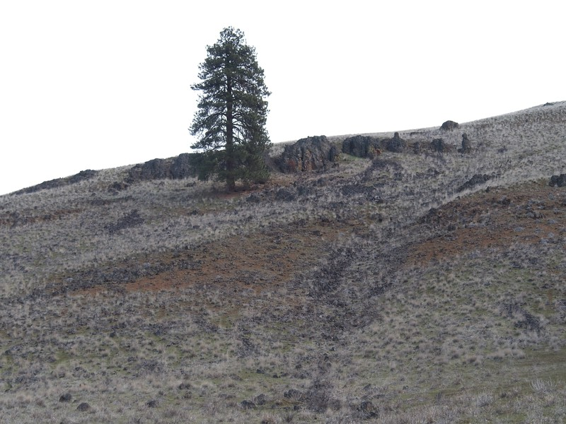 Soda Springs Wildlife Management area Loop