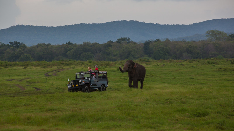safari-sri-lanka.jpg