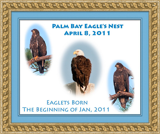 Palm Bay Eagle's Nest - April 8, 2011
