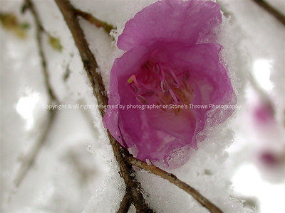 016-botanical-nlg-07apr03-4370