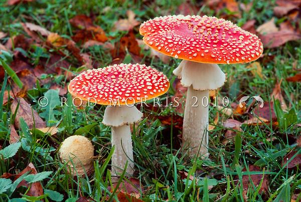 New Zealand Fungi