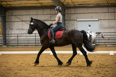 Horse 181