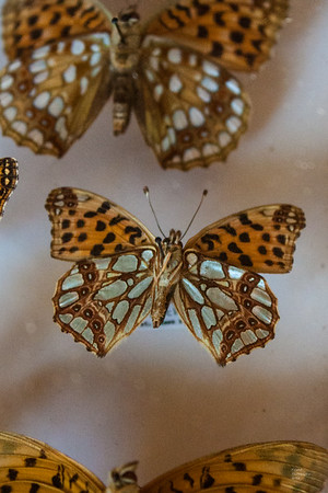 Jim Hedbor Butterfly Collection