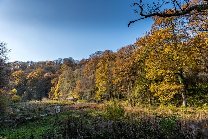 Wakehurst_Autumn-6133.jpg