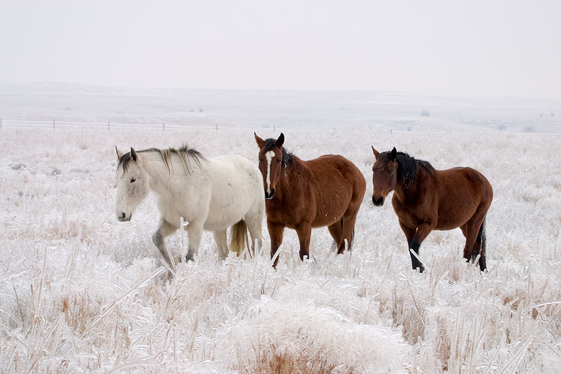 Icy Pasture