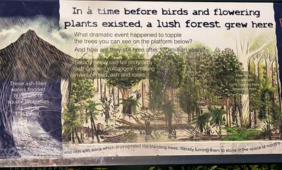 Curio Bay Catlins NZ petrified Forest