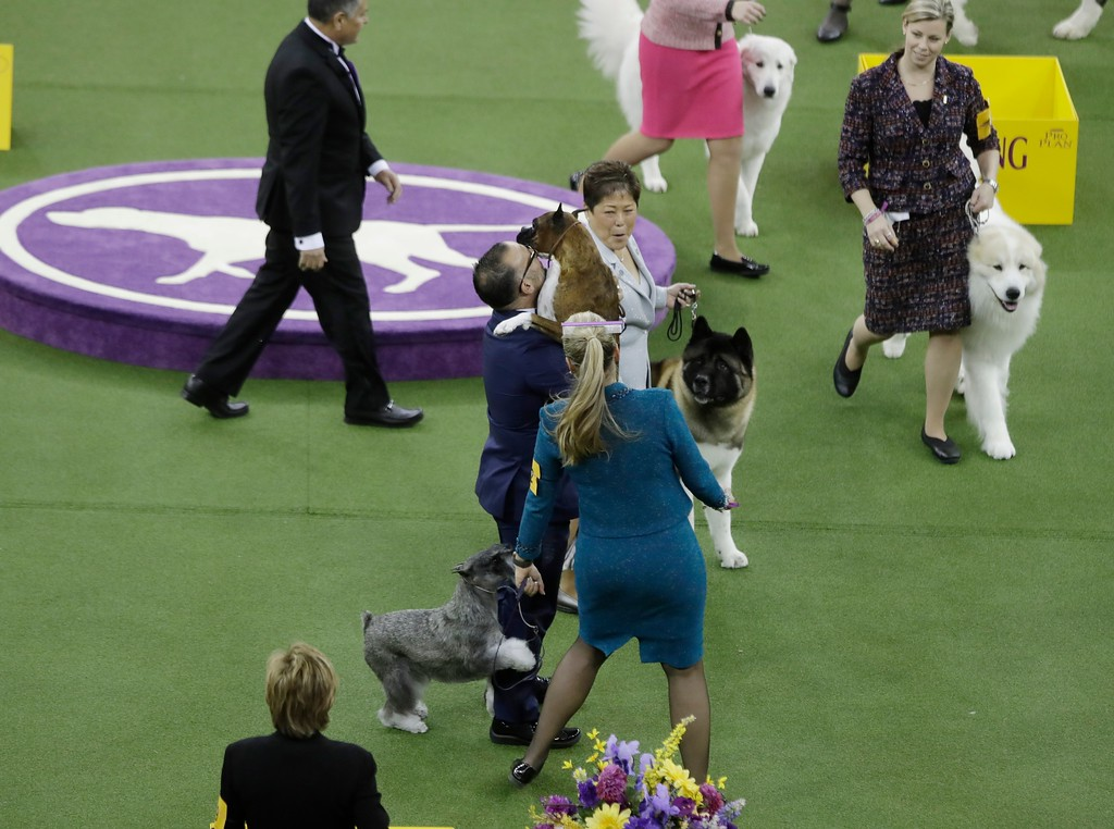 . A handler celebrates as he embraces Devlin, a boxer, after winning the working group during the 141st Westminster Kennel Club Dog Show Tuesday, Feb. 14, 2017, in New York. (AP Photo/Frank Franklin II)