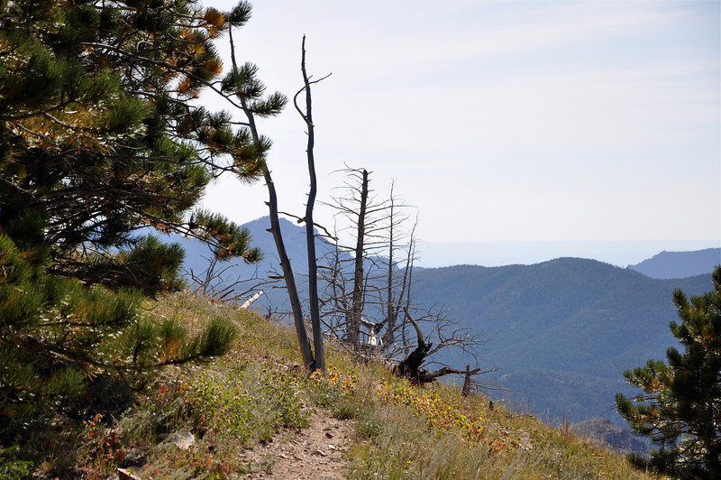 Lots of fire damage to trees facing the direction of the big forest burn last year.