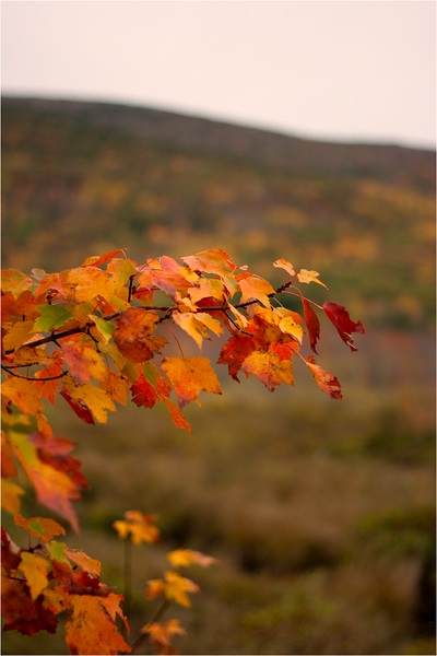 20111019_Autumn08.png