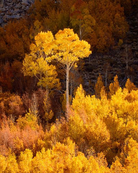 Eastern-Sierras-Bishop-Creek-Fall-Colors-02.jpg