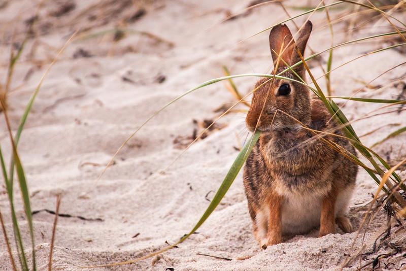 Beach Bunny 2.jpg