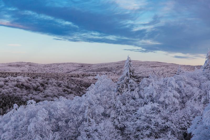 2020-02-01_SN_KS_Frosty Trees-0762.jpg