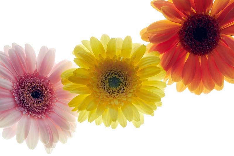Flower_71I8665.jpg