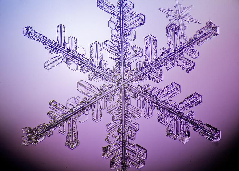 Snowflake-0668-Edit.jpg