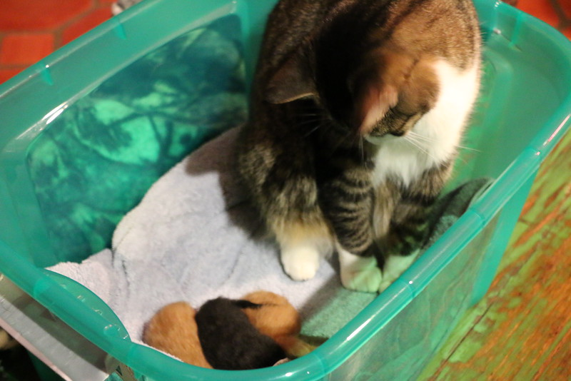 Trapping Mom and Kittens - 040115 - 7.JPG