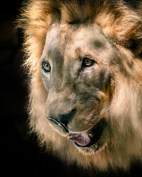 Those-Lion-Eyes-2.jpg