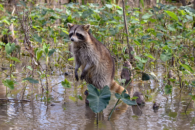 2019 wildlife photo contest entries