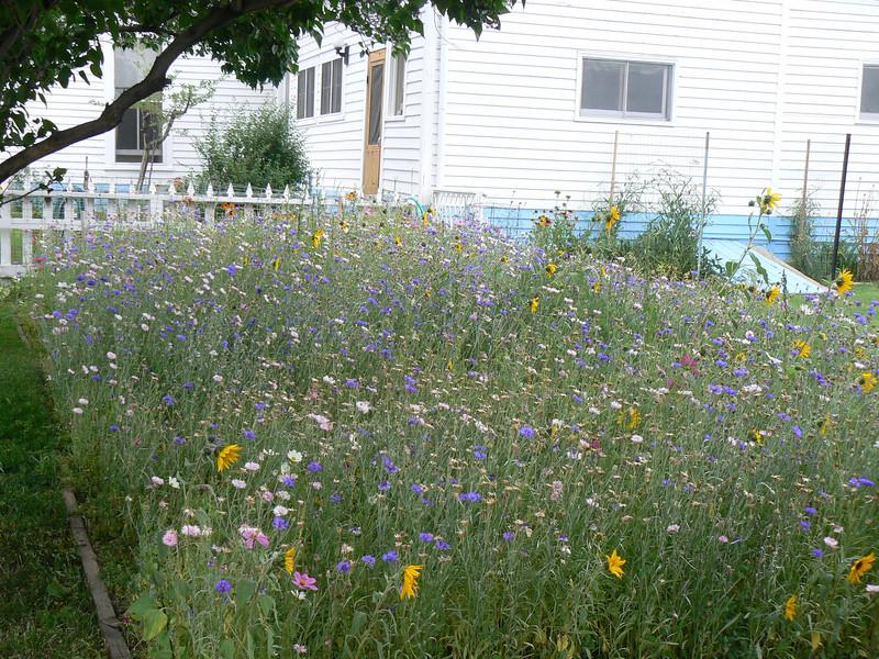 Wild flowers at Jim Thomas House