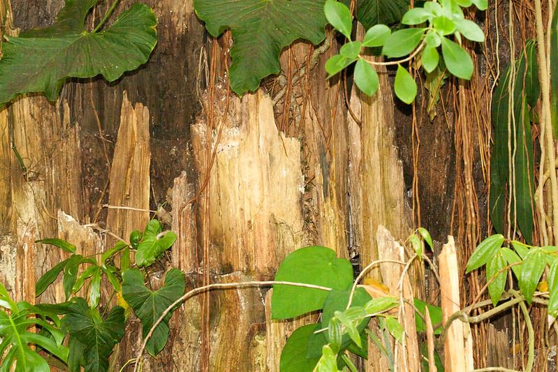 2009 06 30_NY Botanical Gardens_0693.jpg