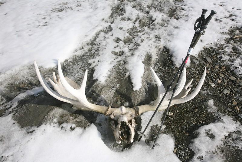 140cm (55+ inches) - Arctic National Wildlife Refuge