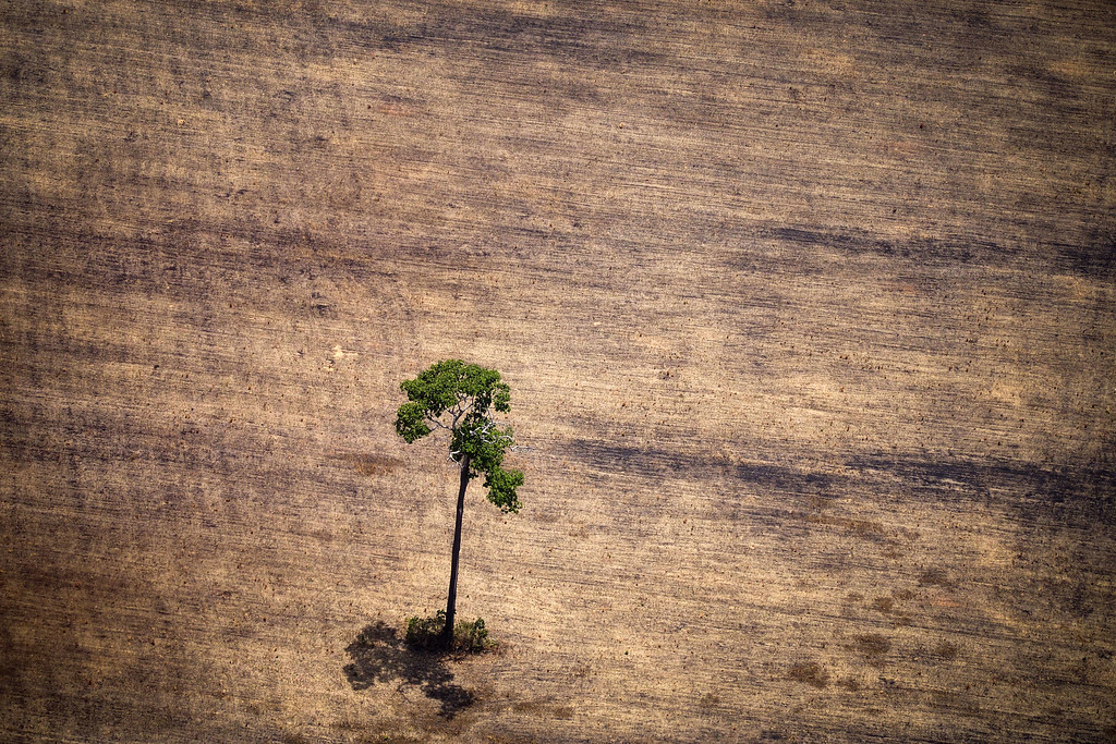 """. View of a tree in a deforested area in the middle of the Amazon jungle during an overflight by Greenpeace activists over areas of illegal exploitation of timber, as part of the second stage of the \""""The Amazon\'s Silent Crisis\"""" report, in the state of Para, Brazil, on October 14, 2014. RAPHAEL ALVES/AFP/Getty Images"""