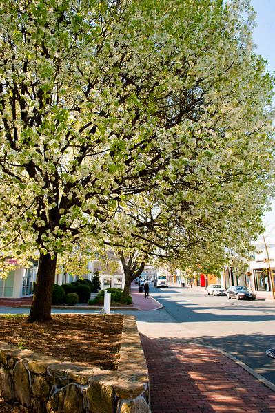Spring Westport_16.jpg