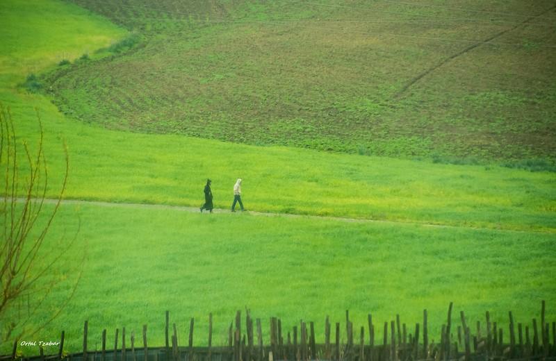 נוף ירוק 7.jpg