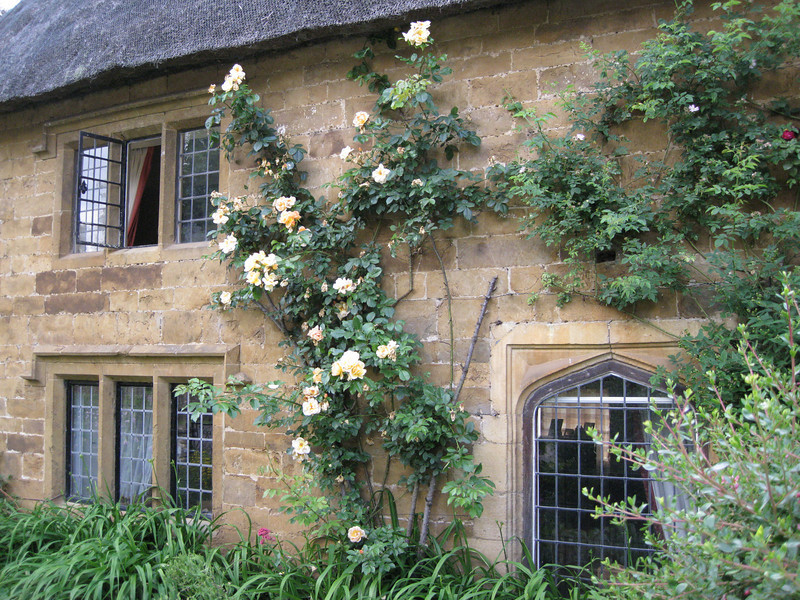 House of Yellow Roses; Wroxton, Oxfordshire, England  Copyright ©2009 Florence T. Gray. This image is protected under International Copyright laws and may not be downloaded, reproduced, copied, transmitted or manipulated without written permission.