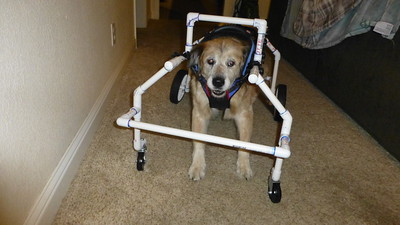 2018/12/20 >> Sandy's Wheelchair
