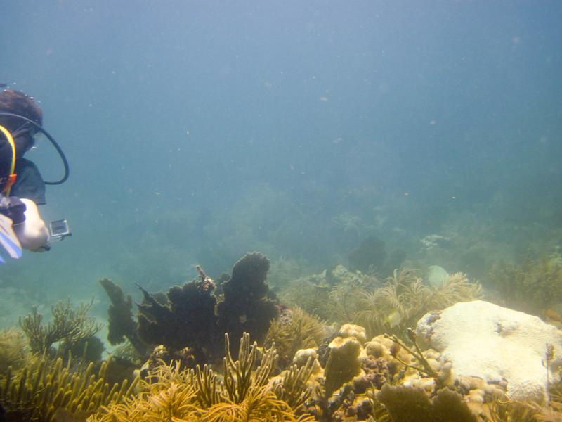 islamorada-diving-2.jpg