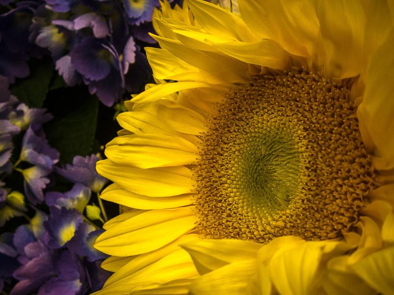 May 11 - Sunflower.jpg