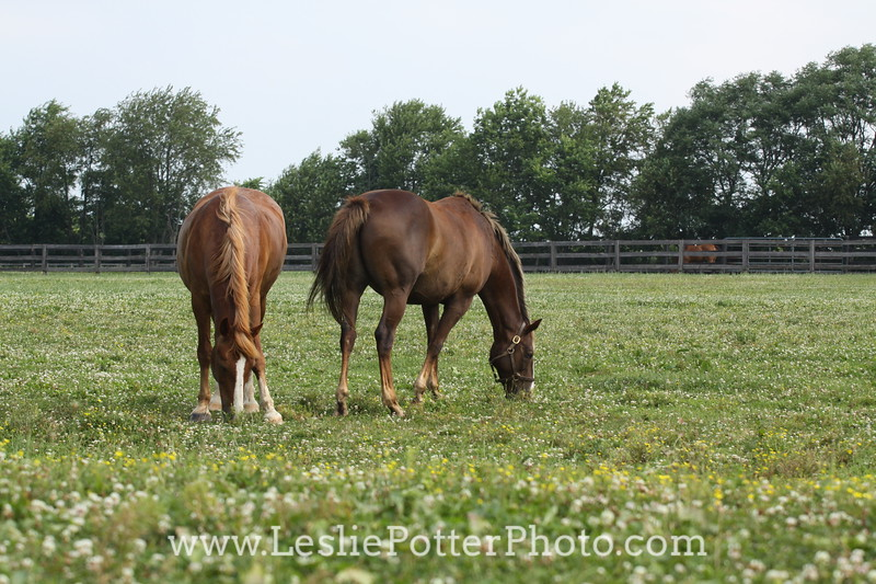 One Horse with a Grazing Muzzle and One Without