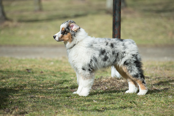 Puppies 4-2-17