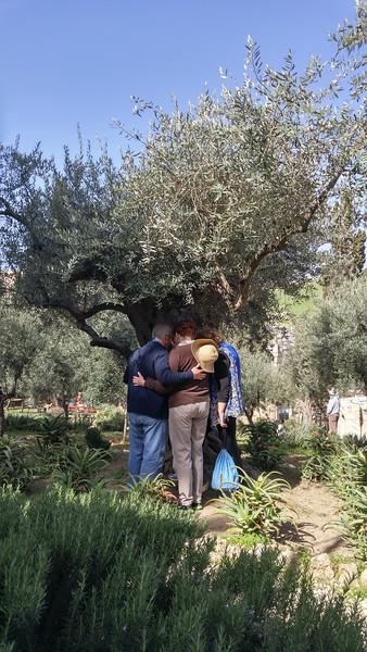 6-garden-of-gethsemane