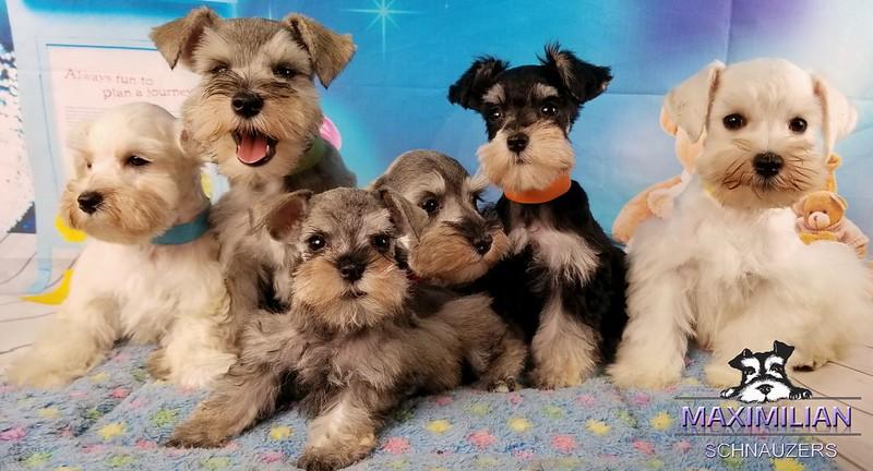 Wunderbar Pups 005.jpg