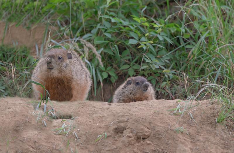 Groundhog and baby
