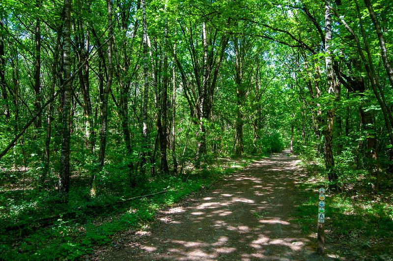 Nationaal Park Hoge Kempen - Duinengordel, omgeving Donderslag 01.jpg