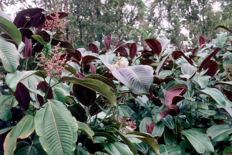 Tree flower in three to six years...  (photoID:bhg000343)