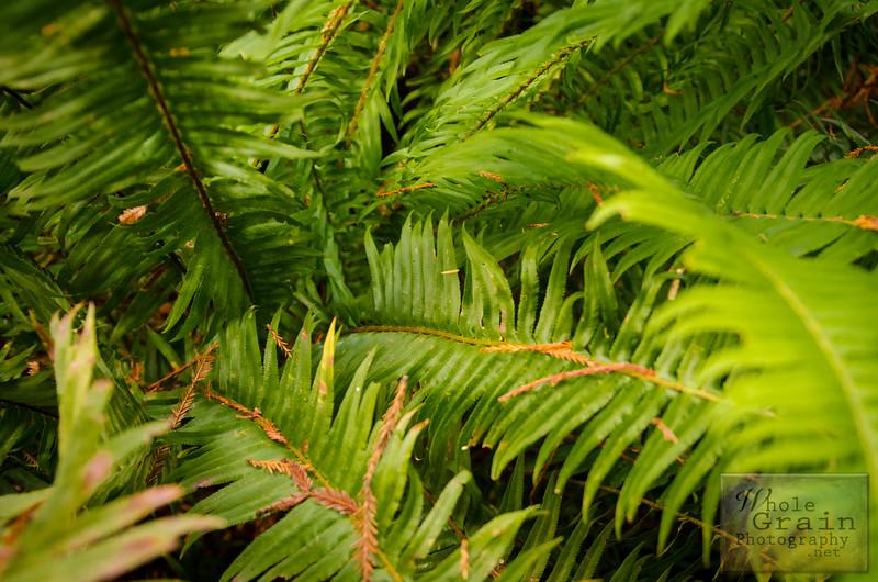 20141015_Redwoods_0069.jpg